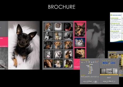 WOOF-DESIGN-SITE-INTERNET-creations-BROCHURE
